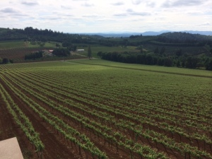 Willamette Valley Vinyards