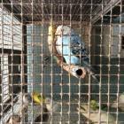 Bird Hospital