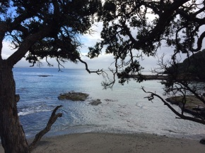 New Zealand Tree and water view1