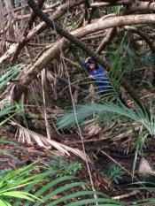 Australia - Kira - Jungle hike