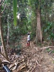 Australia - LHI - Kira Golf Course jungle